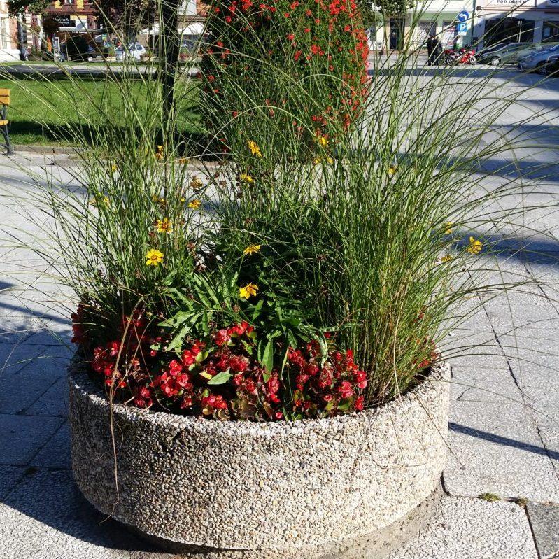 Trawy w kompozycji z bylinami w donicy